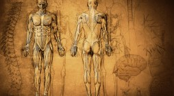 Eduard Pernkopf: The Nazi book of anatomy still used by surgeons