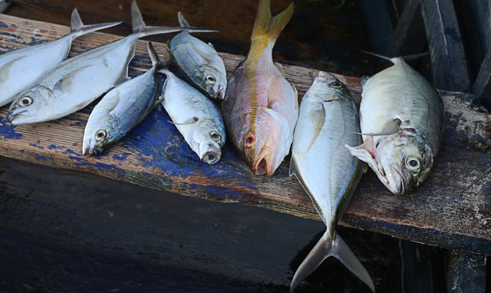 Caribbean States Prepare to Battle Illegal Fishing