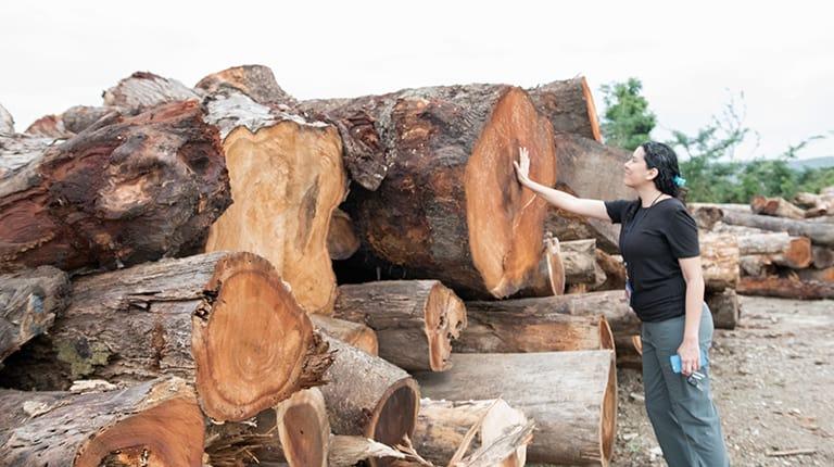 Wood Salvage