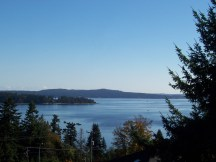 Over the Salish Sea: Oyster Harbour, Pacific Ocean from Cedar Tree