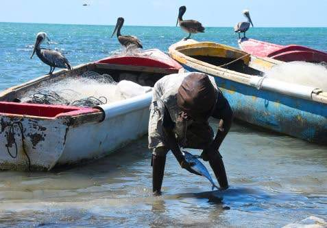 C'bean countries support UN resolution on sustainable fisheries