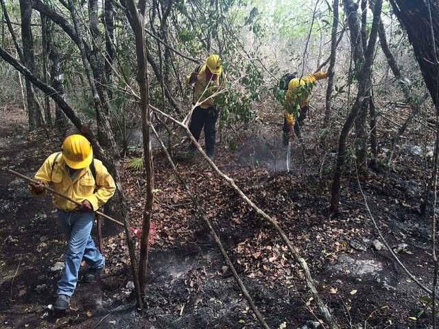 Acusan ambientalistas que cazadores furtivos ocasionan incendios en Mahahual