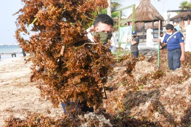 Retiran de playas de Puerto Morelos, 200 toneladas de sargazo