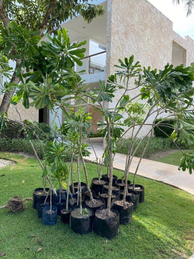 La Fundación Eco-Bahía celebró el día del árbol con la siembra de ejemplares, un llamado a la importancia del cuidado del medio ambiente