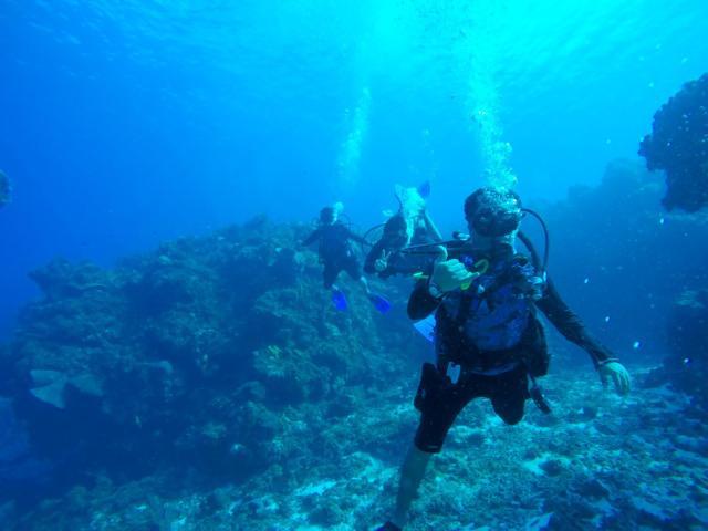 Pierde turismo de buceo cerca de seis mdd de marzo a junio en Cozumel
