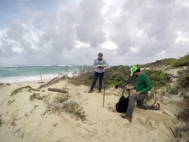Fundación cozumeleña marca más de 230 nidos de tortugas marinas
