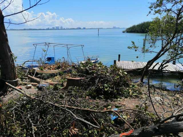 Clausura PROPEPA predio en zona hotelera por tala de manglar