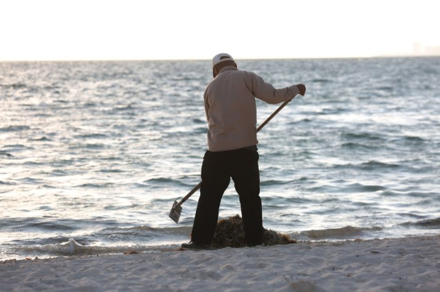 Busca Congreso de Quintana Roo gestionar más recursos para combatir problema del sargazo