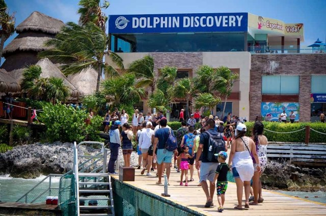 The Dolphin Company celebra 16 años de ser una empresa socialmente responsable