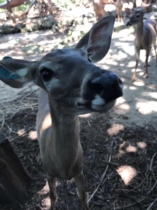 Piden reubicar animales en predio en Puerto Morelos