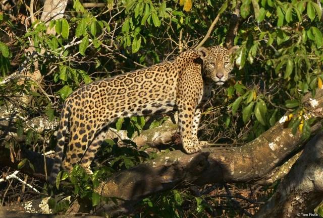 Fundación mexicana ratifica su compromiso con la conservación de la biodiversidad en la Península de Yucatán