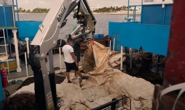 Recolectan en la Riviera Maya más de 24 mil toneladas de zargazo