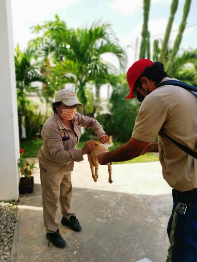 Vacunarán en Campeche a 67 mil mascotas en jornada de vacunación
