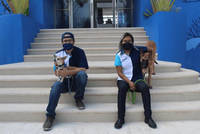 Podrán acompañar perros a sus dueños al trabajo en empresa quintanarroense