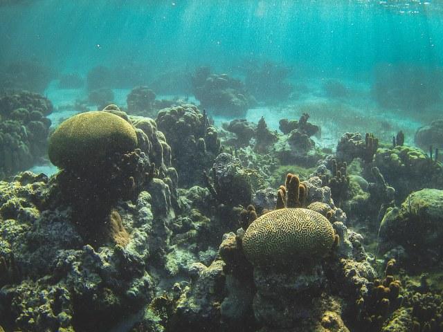 Celebran el Día del Arrecife Mesoamericano durante la Sustainable & Social Tourism Summit