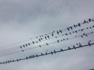 Networking, Success, Network, Carina Asp