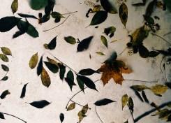 Blader på et bussholdeplasstak - Høst - Carina Behrens, carinabehrens.com