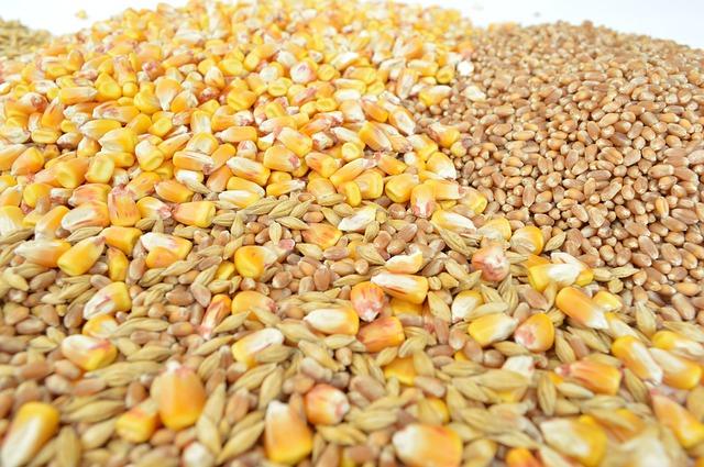 grains-1621880_640