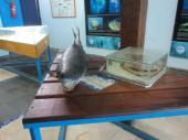 Aquário de Ubatuba (3)