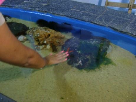 Aquário ubatuba (6)