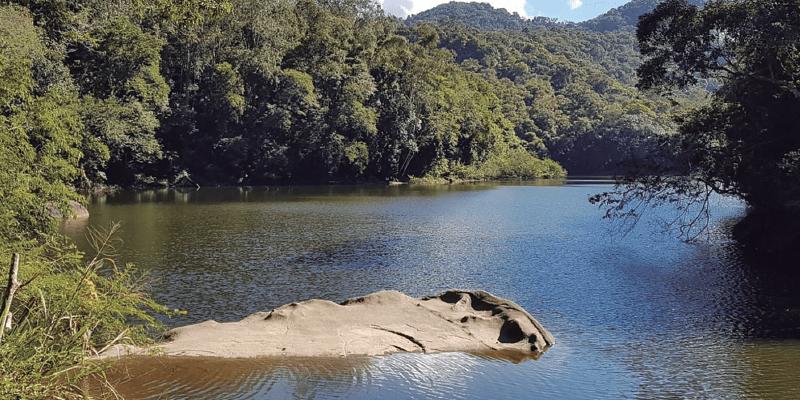 Represa na floresta