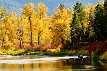 Fall colours on Shuswap River, Enderby, BC