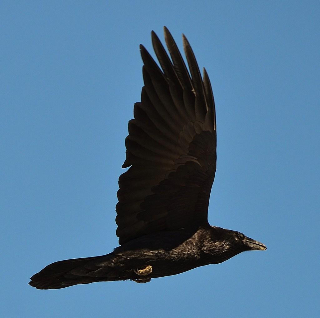 Raven Message