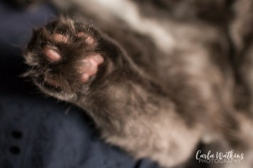 Captain Floof   pet photography by Carla Watkins Photography   carlawatkinsphotography.com