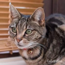 Princess | pet photography by Carla Watkins Photography | carlawatkinsphotography.com