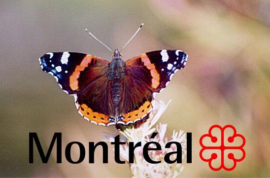 Le Vulcain : pour un insecte emblématique à Montréal (1/6)