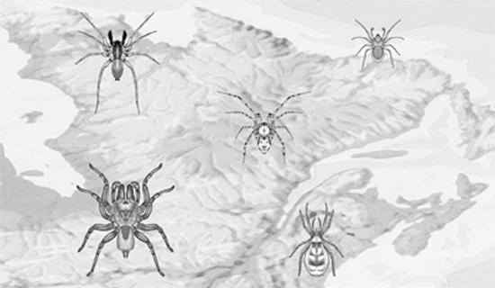 Nouvelles observations sur des araignées du Québec
