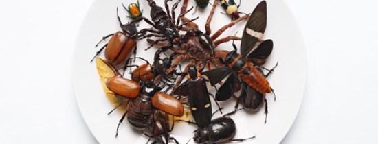 L'étude entomologique peut-elle cohabiter avec la métrosexualité ?