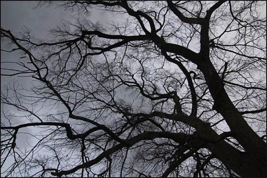 arbre menaçant
