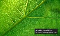 Ouverture de mon photoblogue : photo synthèse