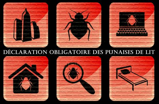 déclaration obligatoire des cas de punaise à Montréal