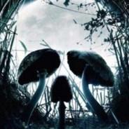 Les champignons toxiques au Québec