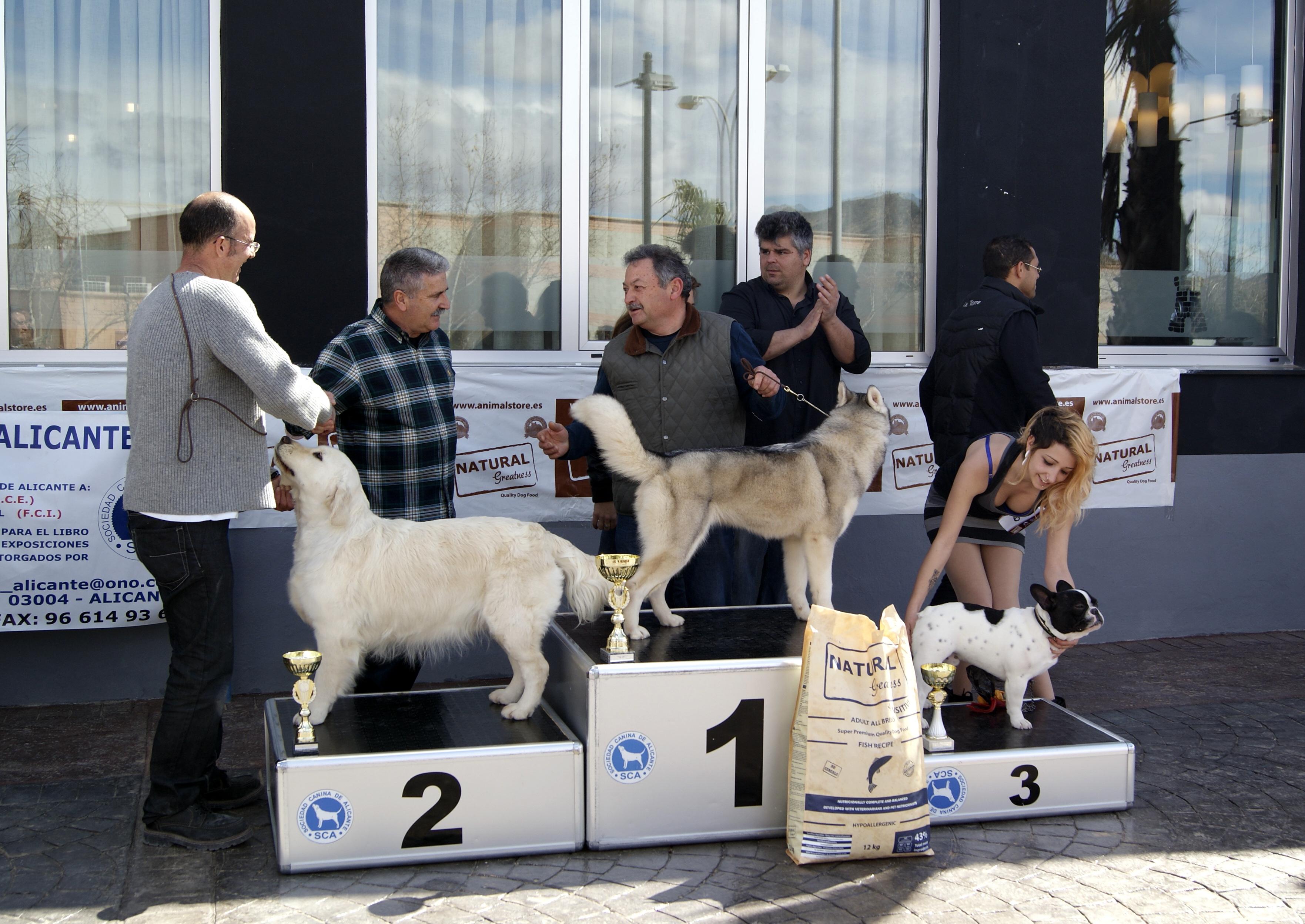 Bulldog frances carlbulls Buso de Carlbulls ALICANTE