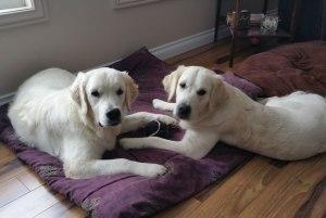 Dugan and Sadie