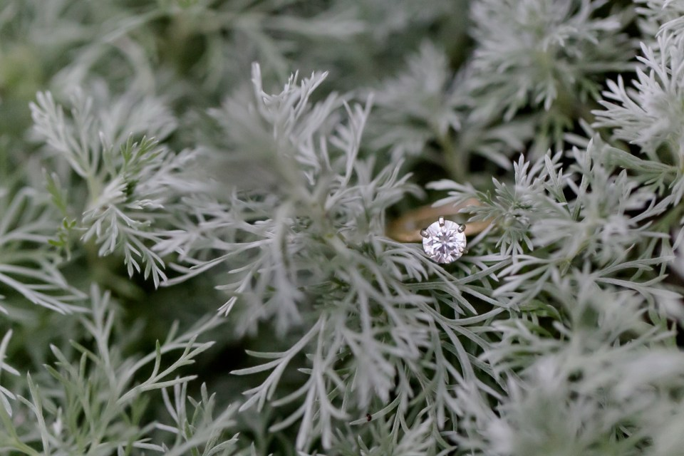 41A-King-George-Virginia-Engagement-1092