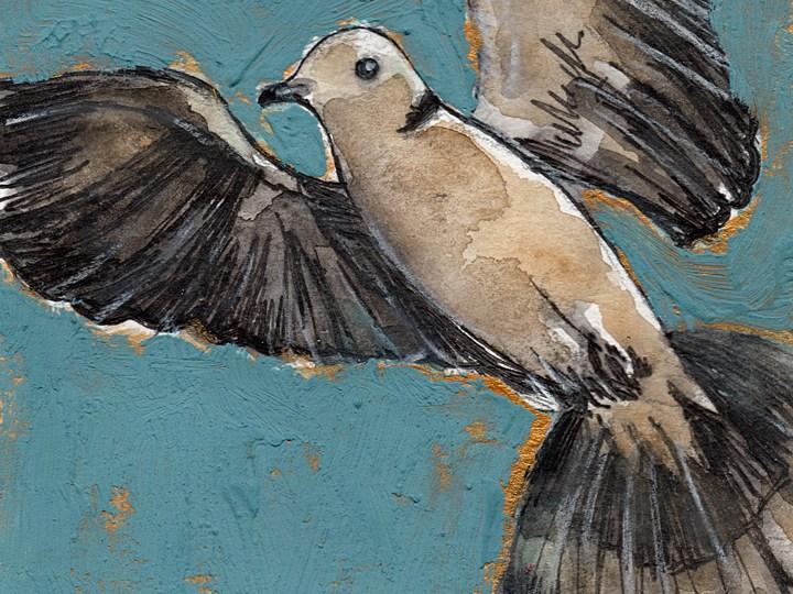 Bird Flashcards: Eurasian Collared Dove