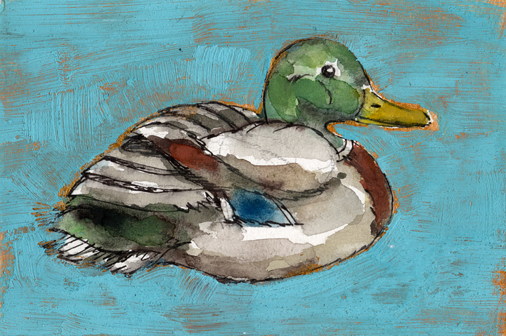 Bird Flashcard: Mallard Duck