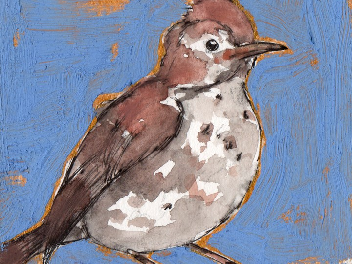 Bird Flashcards: Wood Thrush