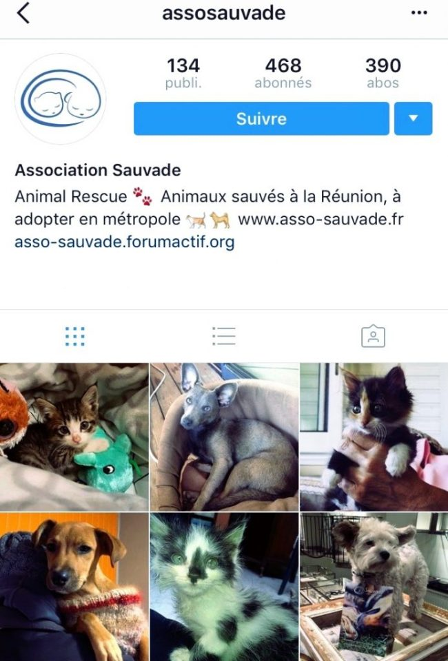 adopter_son_chien_chat_sauvade_association_23