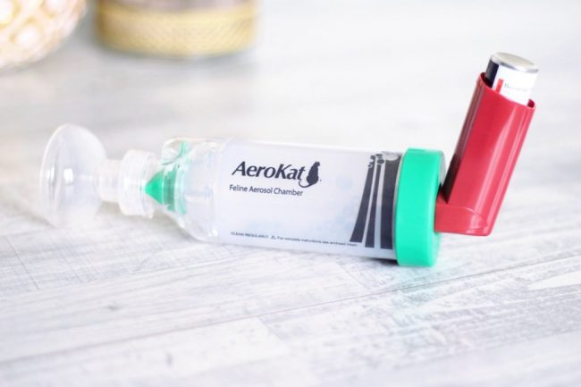 chat asthme asthmatique prevenir guerir asthme félin