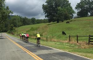 Bikes and cows. Lots of this in Franklin County.