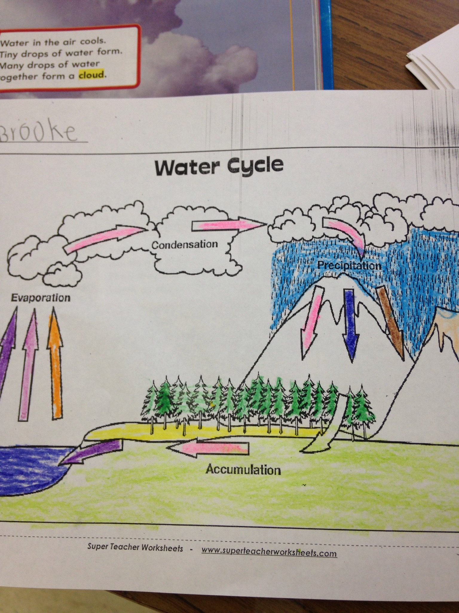 Water Cycle In Bag Experiment Ms Scarboro S 1st Grade
