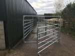 Cattle Handling System - End Gate Open to Show Passage