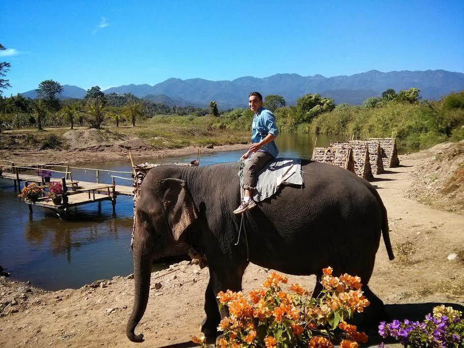 Elephants- Pai