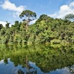 McRitchie Nature Reserve, Singapore