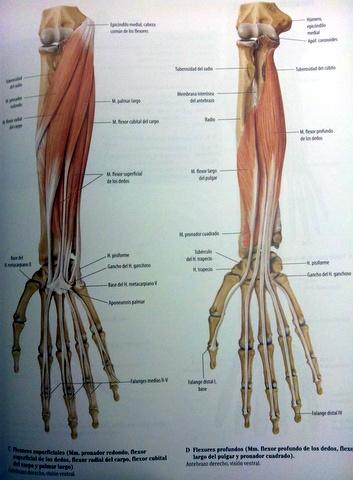 Carlos Lopez Cubas muñeca wrist OSTEON Alaquas Fisioterapia